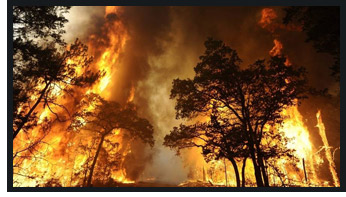Wildfires & Catastrophes